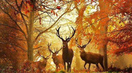 hunting-wallpaper-5